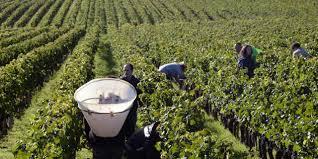 Fin de l'exonération des cotisations pour les saisonniers agricoles ?