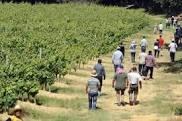 Travailleurs saisonniers : un enjeu vital pour les agriculteurs