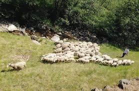 Quel avenir pour le pastoralisme en Ardèche ?