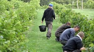 Recul du Gouvernement sur les travailleurs saisonniers agricoles