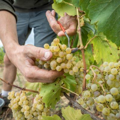 taxes douanières vins 2