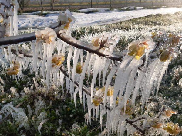 Mesures durgence pour soutenir nos agriculteurs suite aux dégâts irréversibles du gel printanier